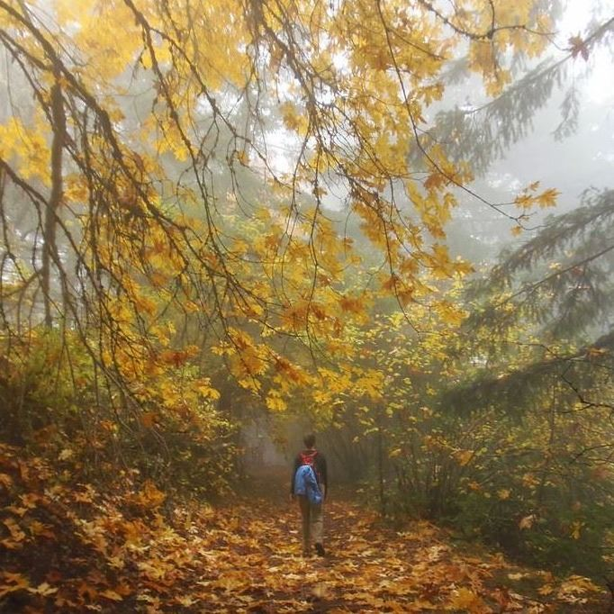 boy hiking in the woods in autumn